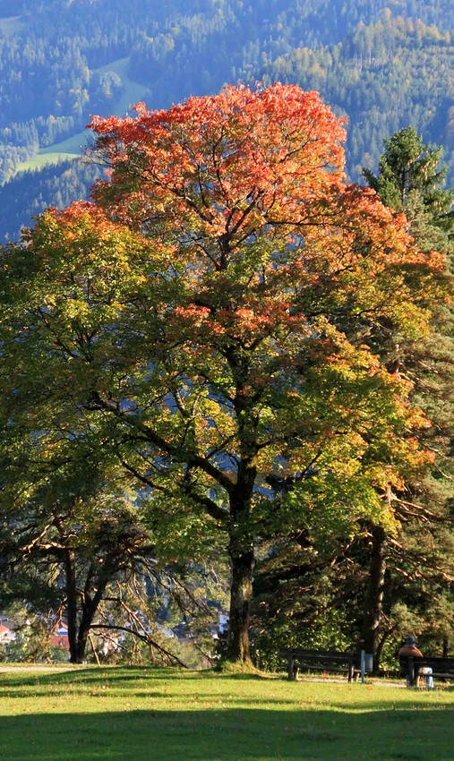 im Herbstkleid