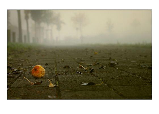 Im Herbstnebel.