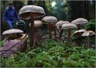 Im Herbstwald...