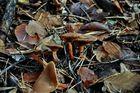 Im Herbstwald geht man besser....