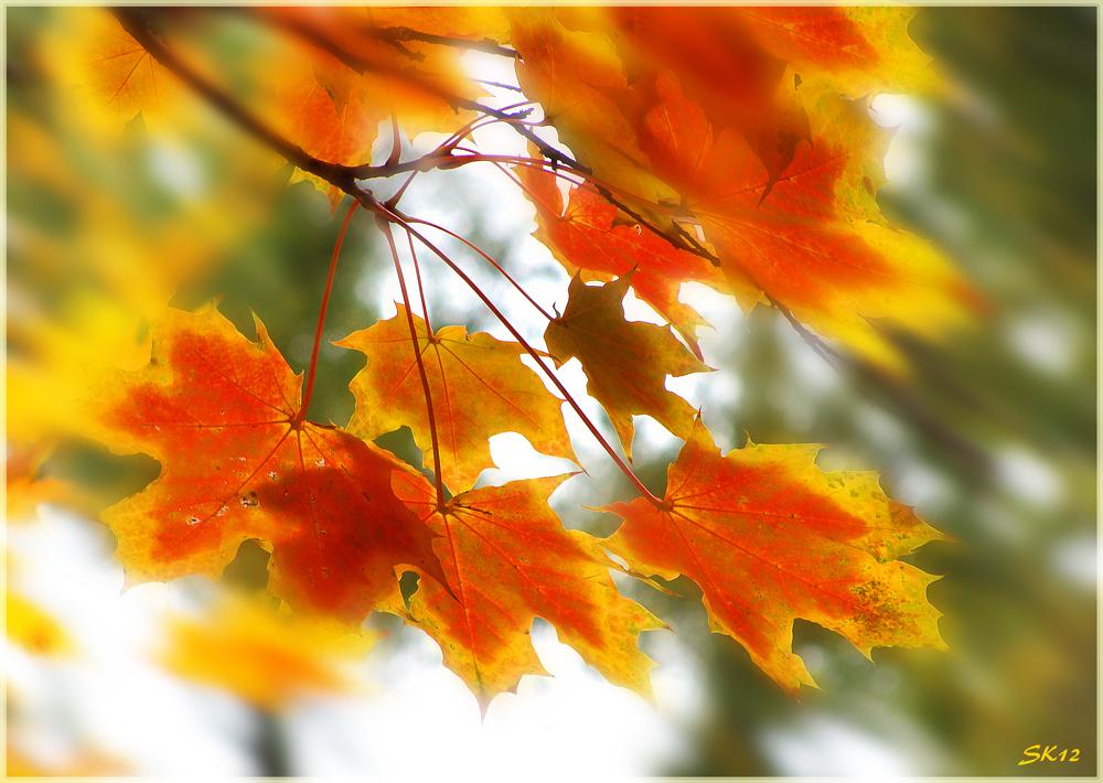 im Herbstwind...