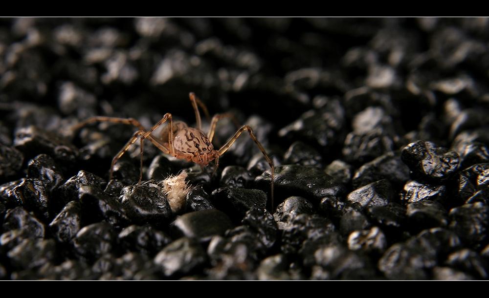 I`m Here To Catch U (Spider)
