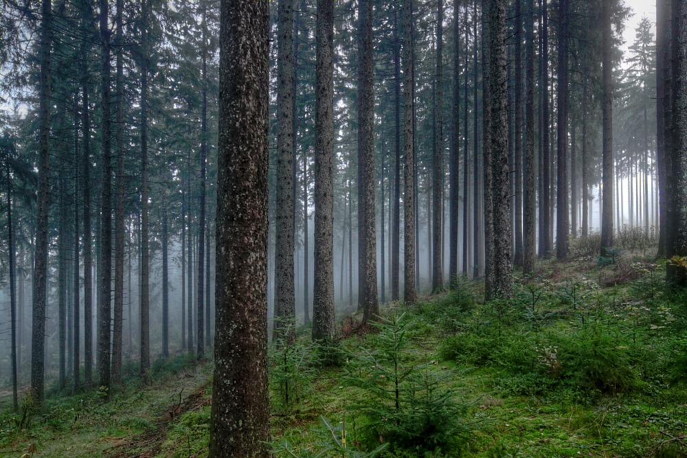 im Hochschwarzwald