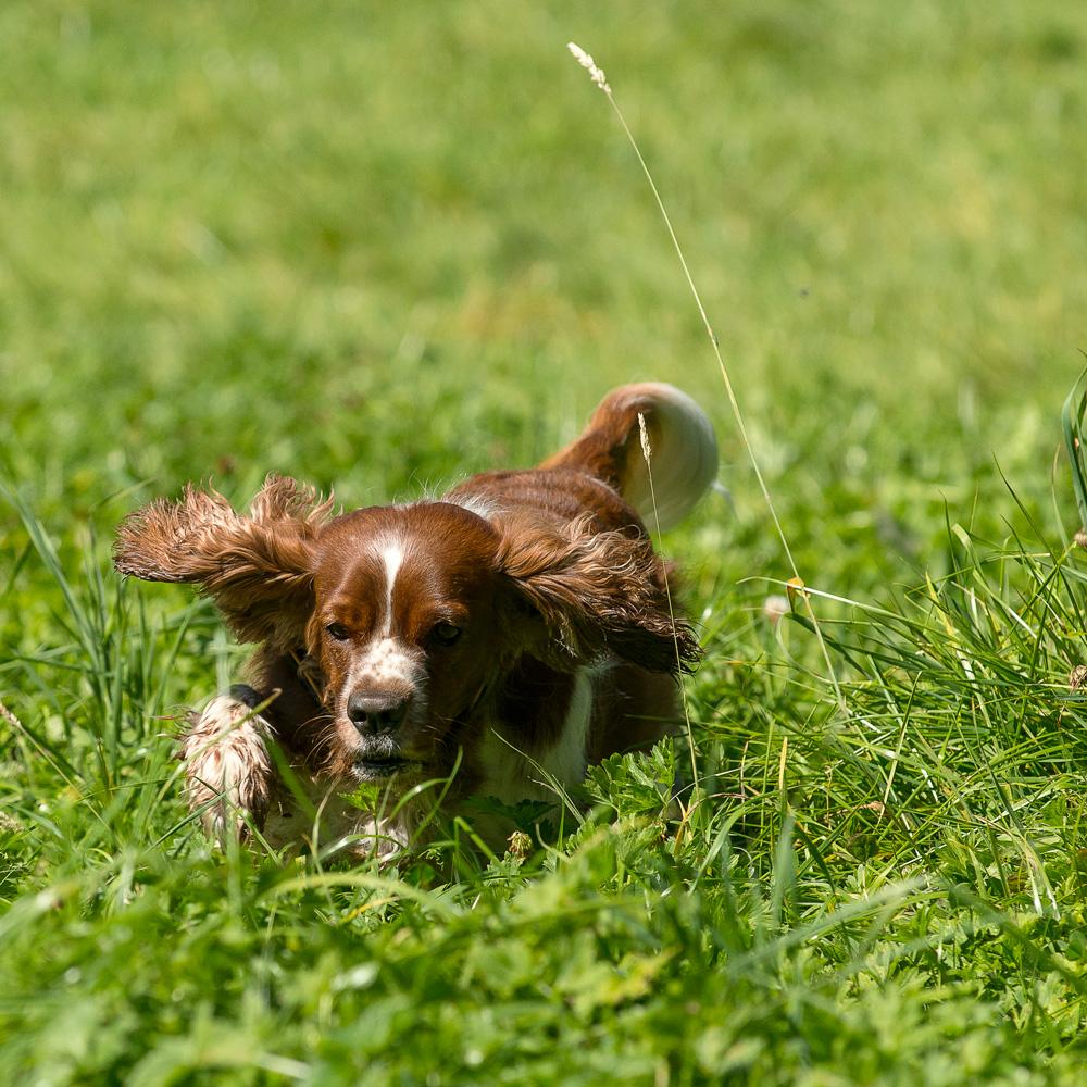 ...im hohen Gras muss die Kleine kämpfen....
