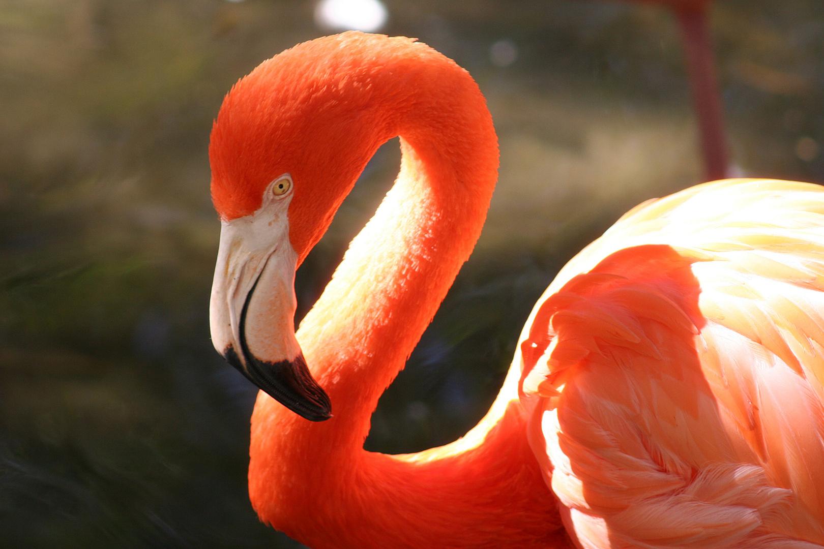 im Homosassa Springs Wildlife State Park, Florida