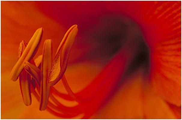 """Im """"Innern"""" der Blüte"""
