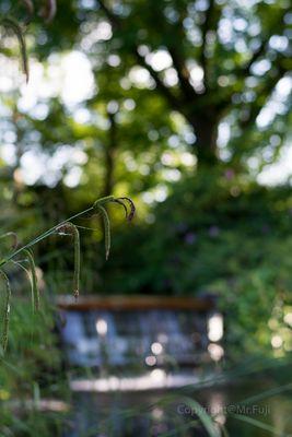 Im Japanischen Garten.