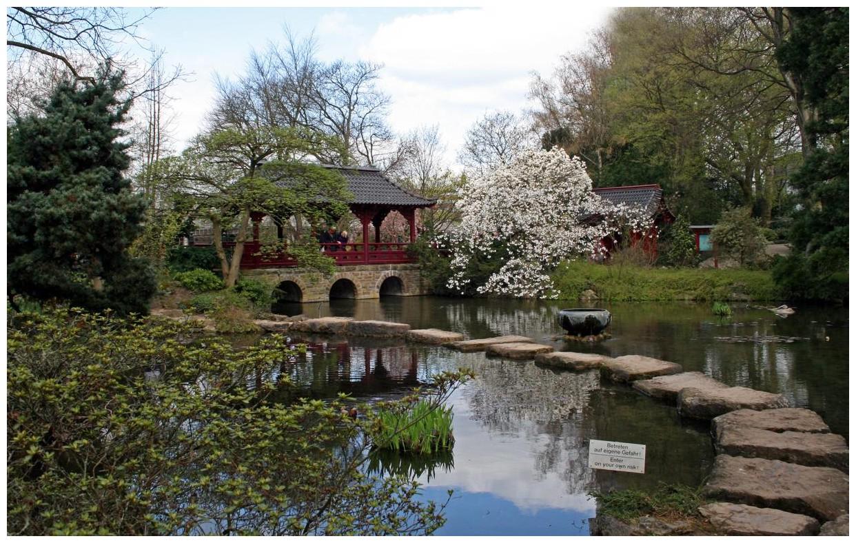 im japanischen Garten der BAYER AG in Leverkusen