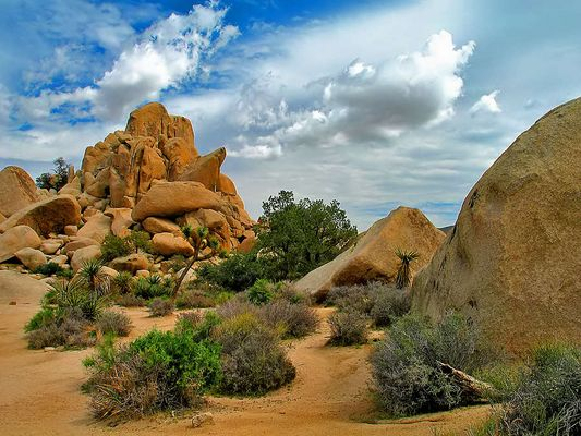 Im Joshua Tree Nationalpark