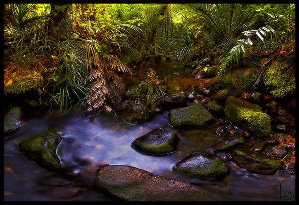 Im Jungle entspringt ein Fluss