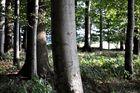 Im Kastanienwald