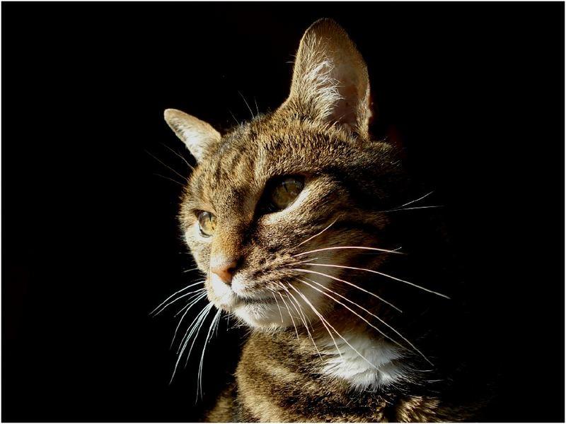 im Katzenfotostudio ;-)