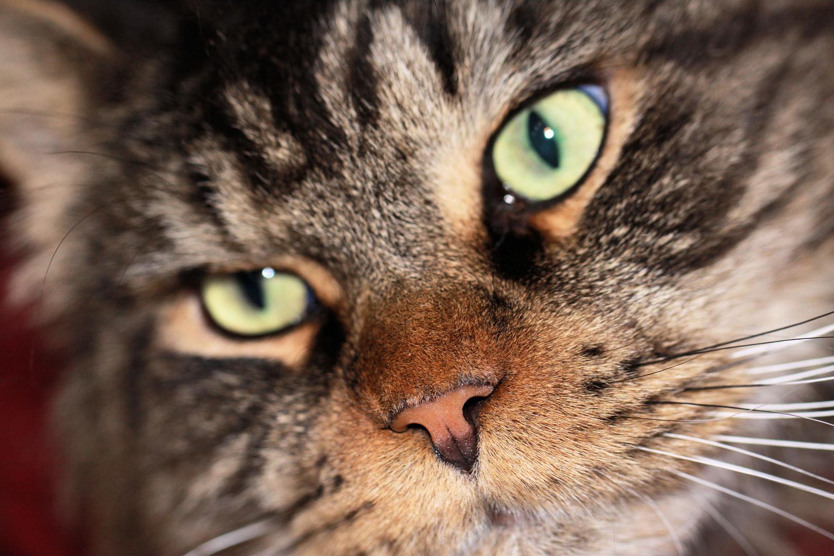 Im Katzenhaus zu Buggingen ...