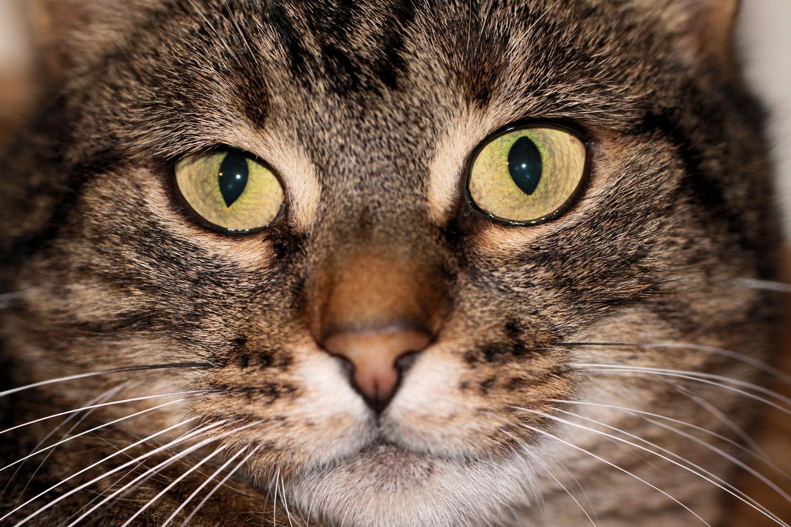 Im Katzenhaus zu Buggingen ... Ich suche eine neue Heimat!