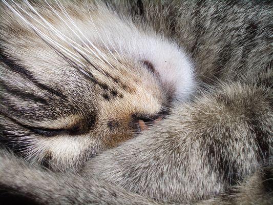 Im Katzenhimmel