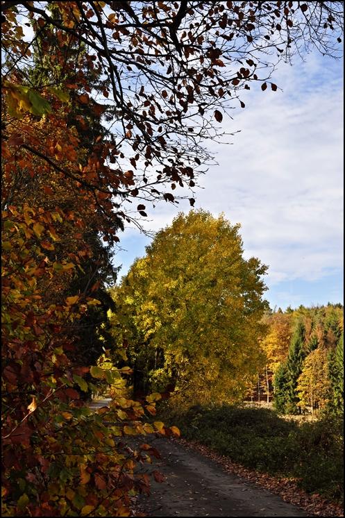 im Kellerwald