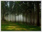 Im Keltenwald...... #3