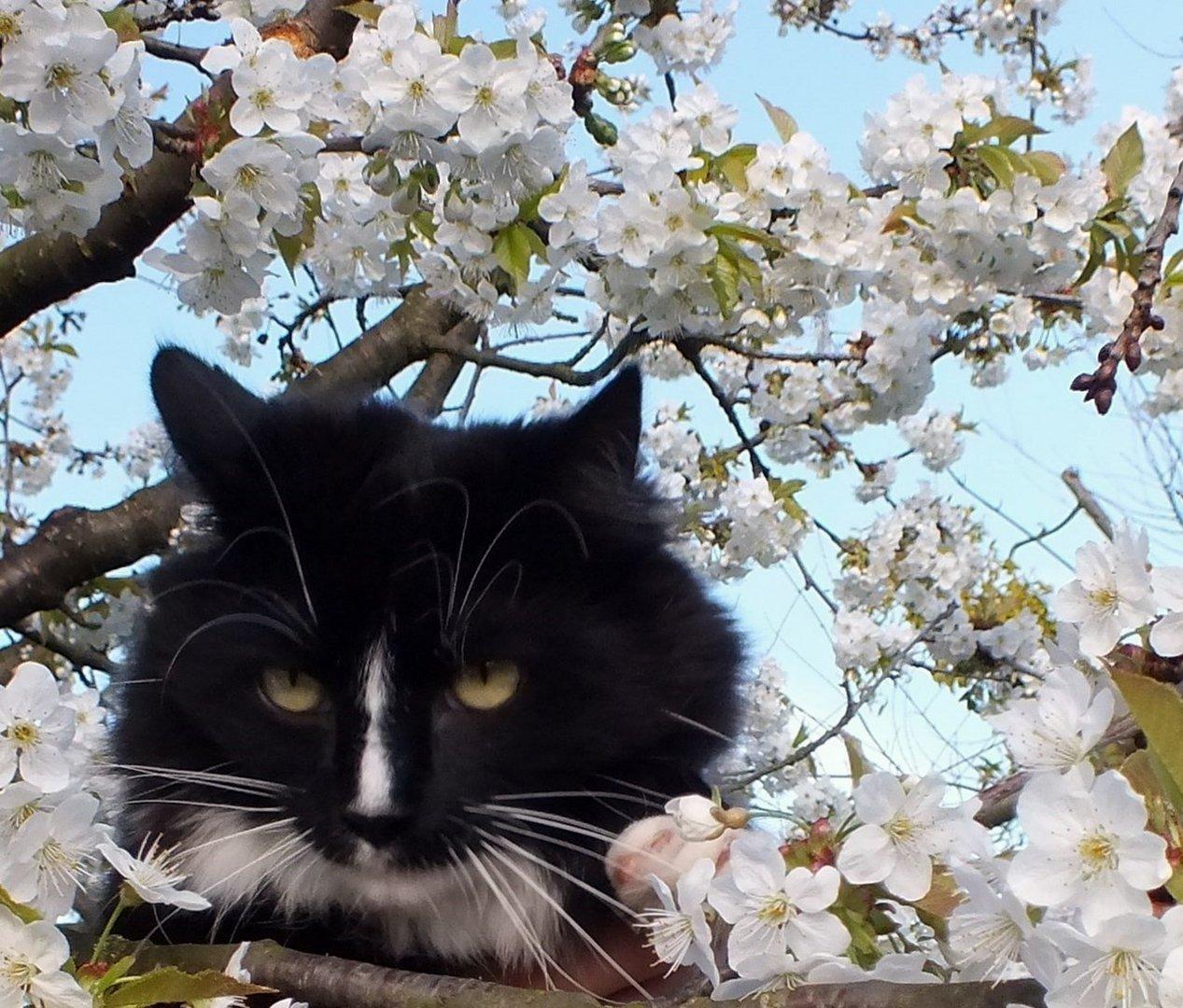 im Kirschenbaum