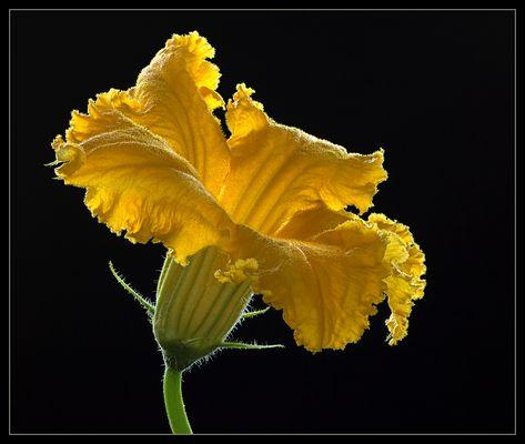 Im klassischem Sinne bin ich vielleicht keine Blume .. aber dennoch wunderschön