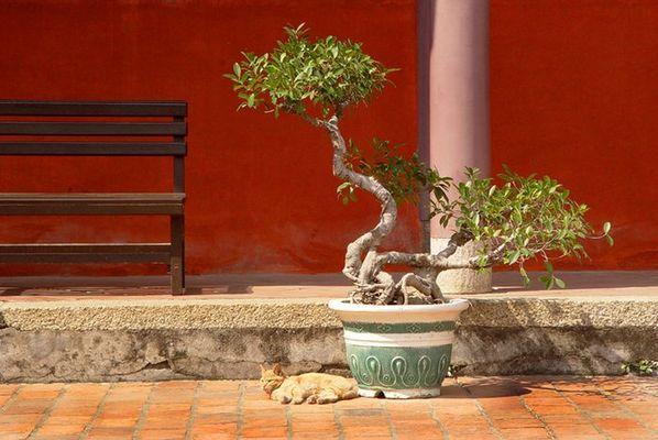 Im Konfuzius - Tempel in Tainan / Taiwan