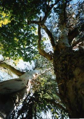 Im Korkeichenwald