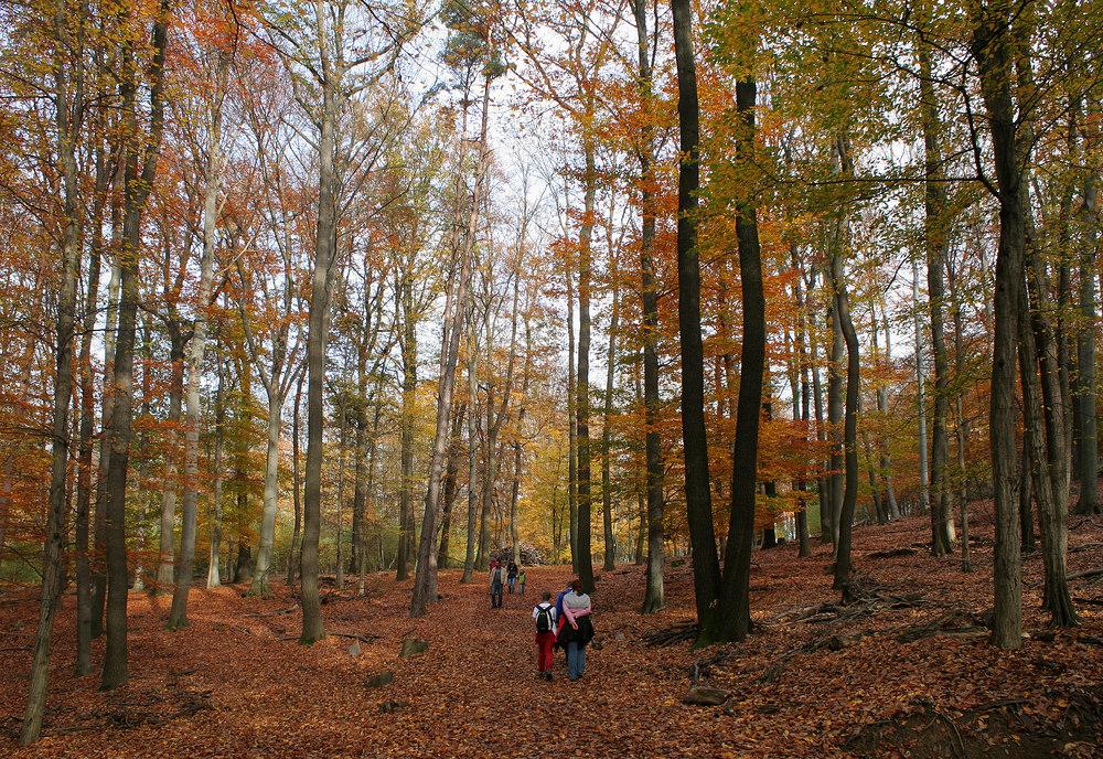 Im Lainzer Tiergarten (2)