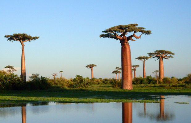 Im Land der Affenbrotbäume