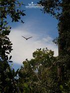 Im Land der Pelikane