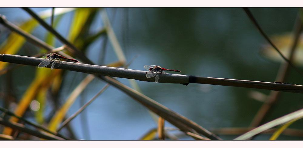 Im Libellenparadies