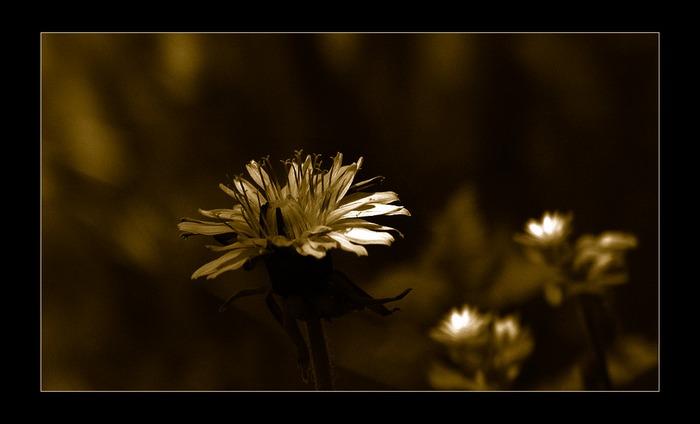 Im Licht 4