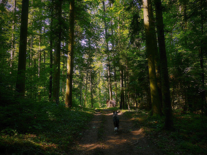 im Licht des Waldes