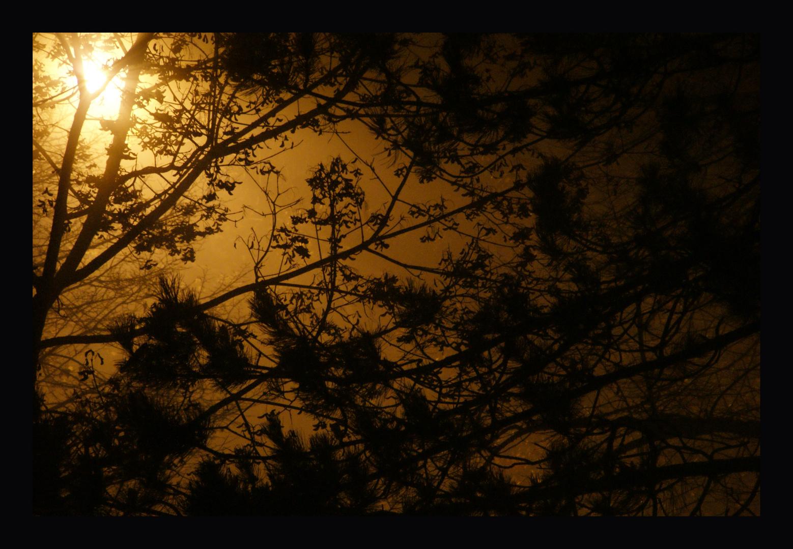 Im Licht
