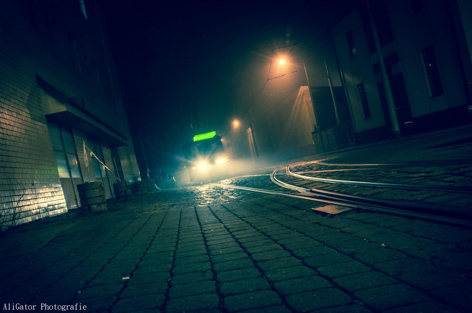 Im Lichte des Nebels