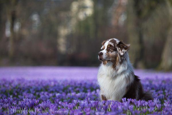 Im lila Blütenmeer...