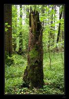 Im Märchenwald...