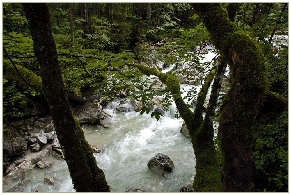 Im Märchenwald bei Ramsau.