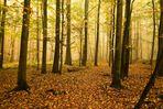 Im Märchenwald I