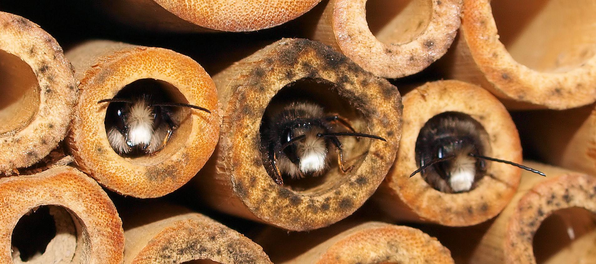 Im März/April....sehe ich meine Bienen wieder ;)....