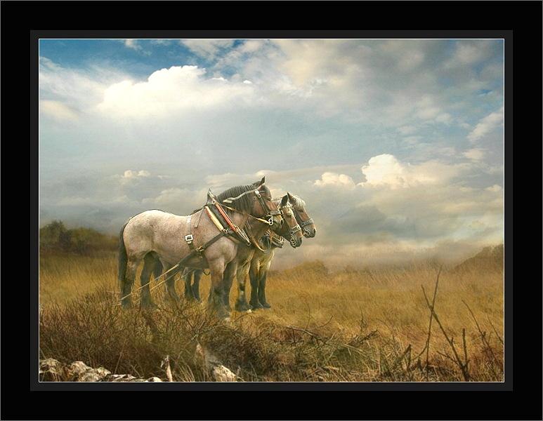 Im Märzen der Bauer die Rößlein einspannt.....