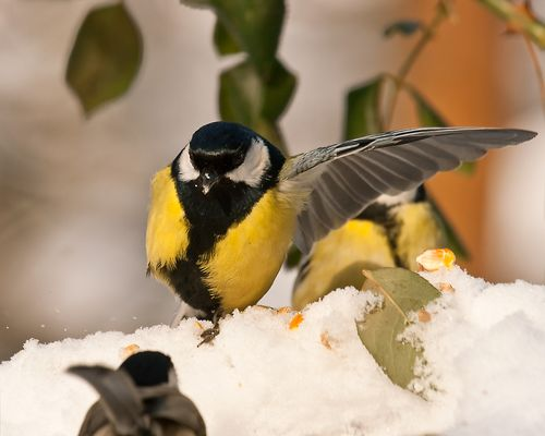 I'm Major Parus, acts to control !
