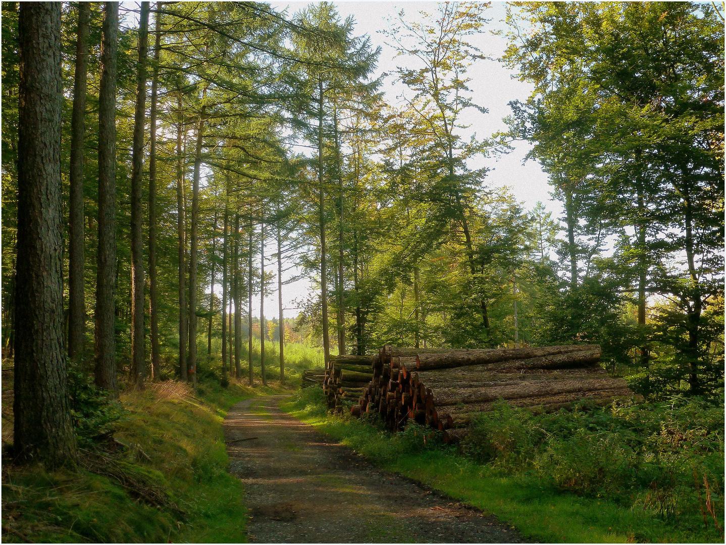 Im Marscheider Wald (2)