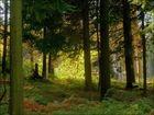 Im Marscheider Wald (3)