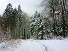 Im Marscheider Wald