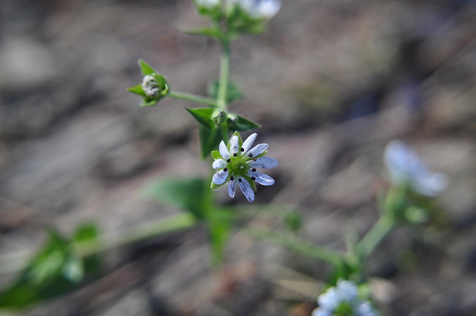 Im Mittelpunkt die Blume