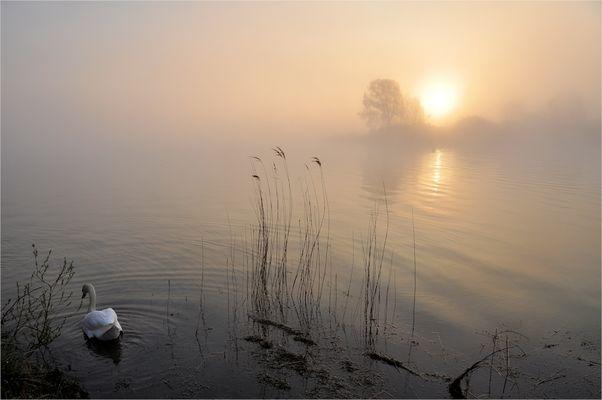 im Morgen- NEBEL