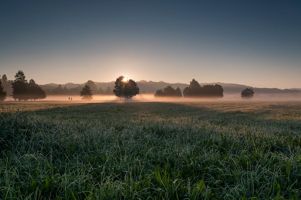 im Morgenlicht