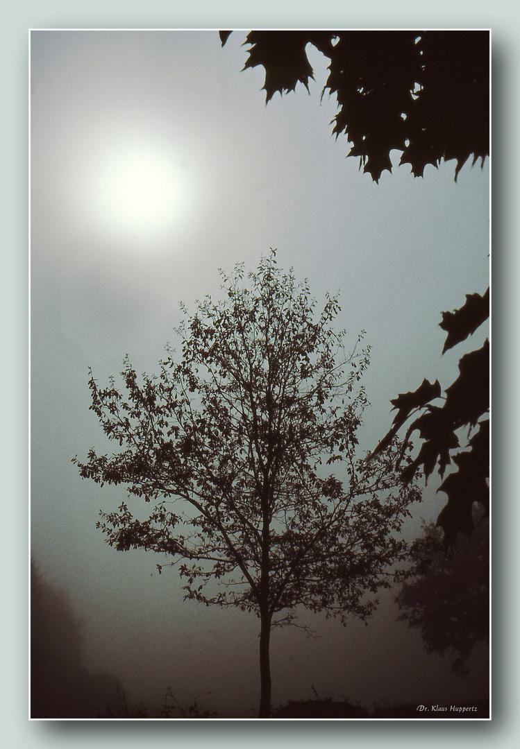 im Morgennebel