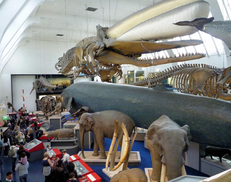 Im Museum ist was los....