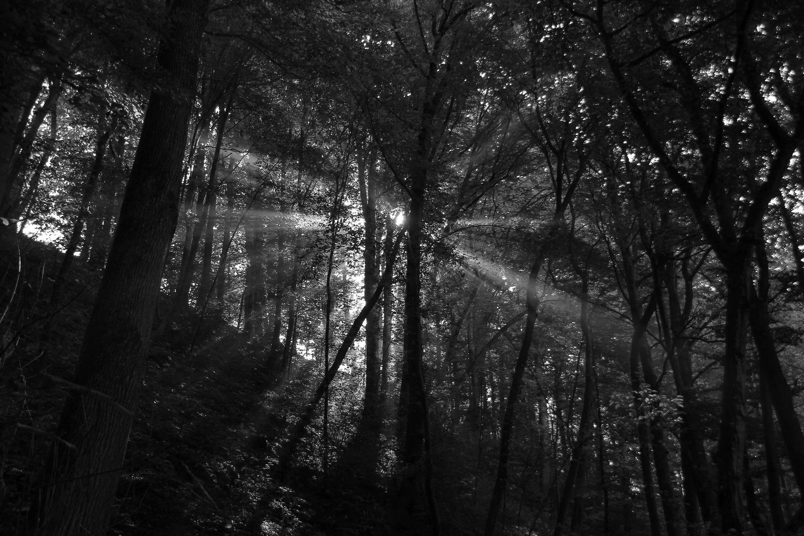 Im mystischen Wald