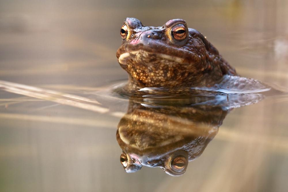 Im nächsten Leben werd ich ein Froschkönig